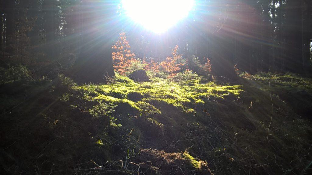 Das Bild ist Sinnbild für energetisches Arbeiten - ein heller fast schon greller Lichtstrahl fällt auf den Waldboden und lässt das Moos erstrahlen.